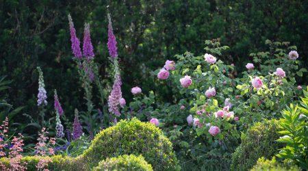 Peters Garten